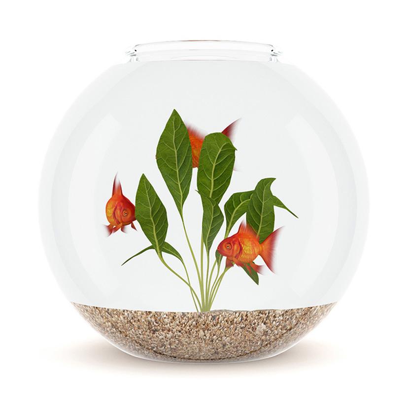 C4D圆形玻璃鱼缸模型创意场景3D模型素材