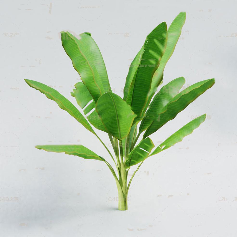 C4D OBJ三维素材植物观花草树木香蕉绿叶材质贴图Blend模型
