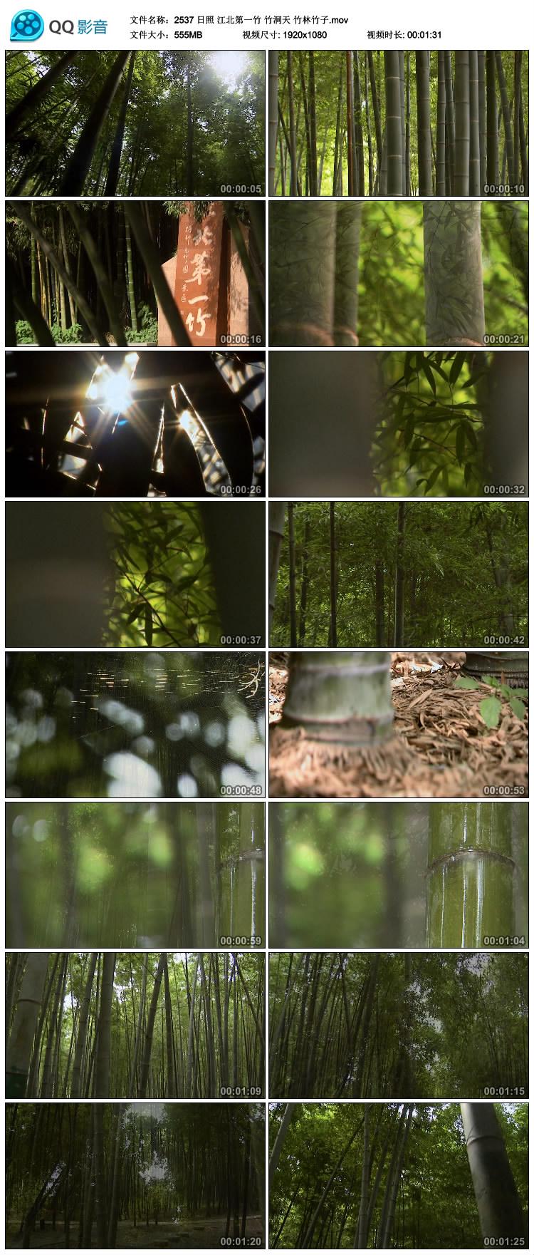 日照 江北第一竹 竹洞天 竹林竹子 高清实拍视频素材