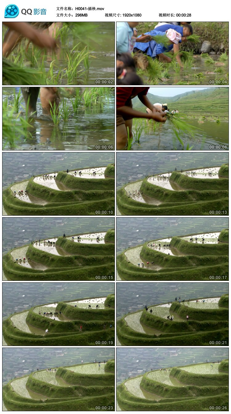 水稻农民插秧种植稻田梯田 农业 影视动态宣传片视频高清实拍素材