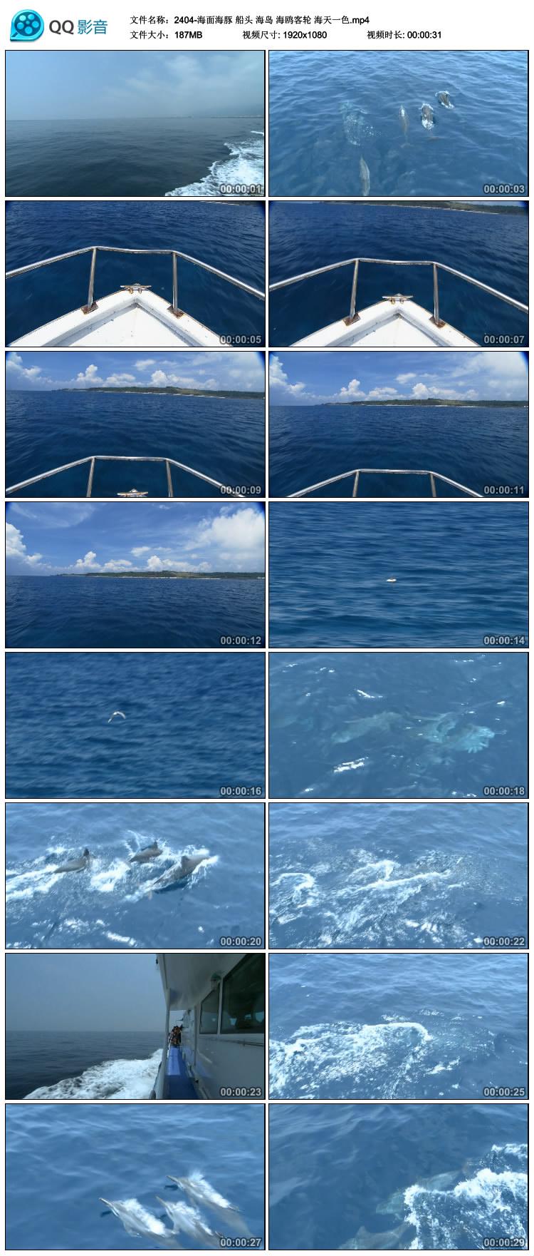 网传 海面海豚 船头 海岛 海鸥客轮 海天一色 中国高清视频素材