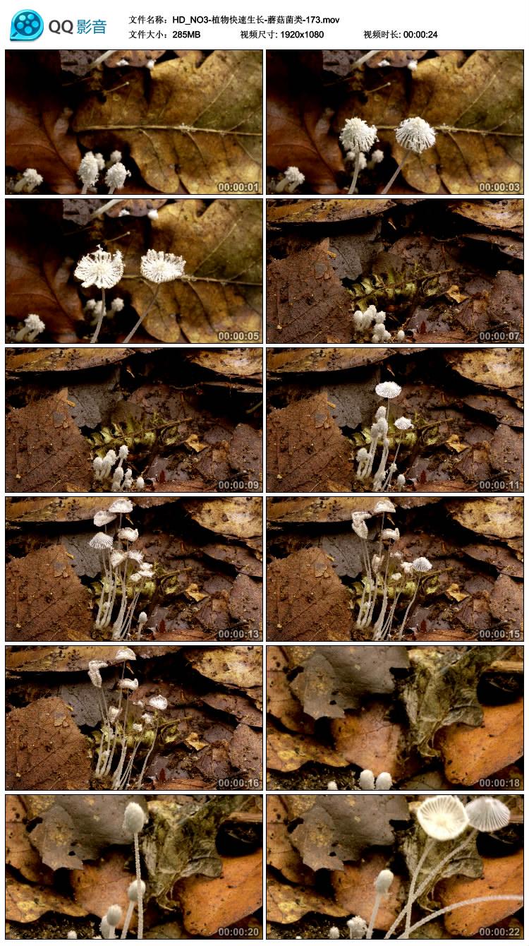 蘑菇菌类快速生长 植物花草树木高清实拍影视频素材