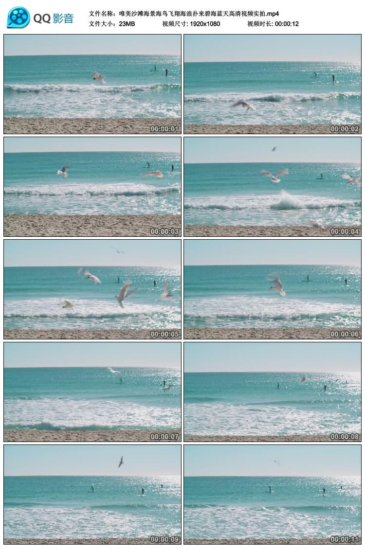 视频素材沙滩上的海鸥飞翔高清实拍大屏幕海面飞翔空中飞舞专题片